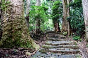 三重県の有名人聖火ランナーは誰?